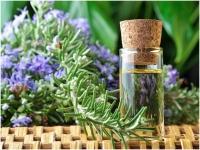 Chiết xuất hương thảo