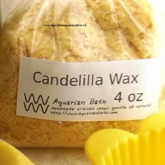 Sáp candelilla (Candelilla wax) - Cung cấp nguyên liệu làm mỹ phẩm giá sỉ