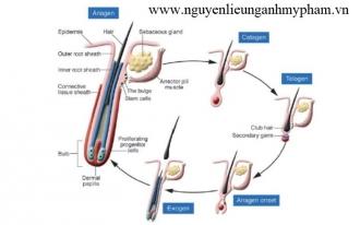 Cung cấp chất chống rụng tóc Redensyl – Bán nguyên liệu mỹ phẩm giá sỉ, bán Redensyl giá sỉ